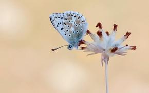 Картинка цветок, макро, фон, бабочка
