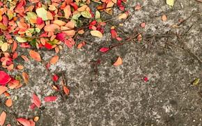 Картинка осень, листья, фон, colorful, autumn, leaves