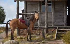 Картинка дом, лошадь, седло