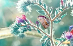 Картинка макро, лучи, природа, бабочка, растение, боке, Mustafa Öztürk