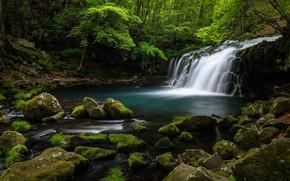 Картинка камни, водопад, кусты, водоем, булыжники, зелень, вода, растительность, лето, поток, лес, каскад