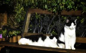 Картинка листья, кошки, цветы, скамейка, отдых, коты, две, сад, пара, черно-белые