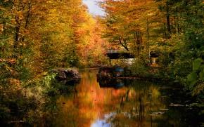 Картинка осень, лес, мост, пруд, парк