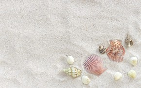 Картинка песок, пляж, лето, ракушки, summer, beach, sea, sand, marine, seashells
