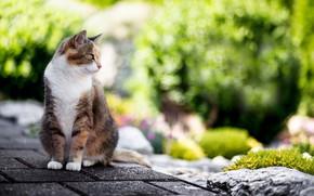 Картинка кошка, лето, шерсть