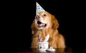 Картинка собака, праздник, друг