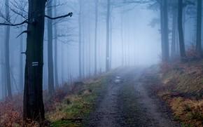 Картинка дорога, осень, лес, деревья, природа, туман