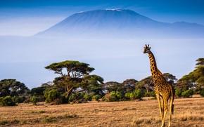 Картинка пейзаж, природа, гора, жираф