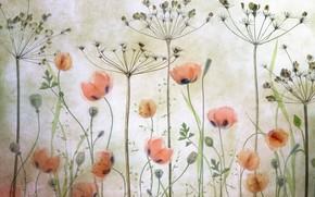 Картинка трава, рисунок, маки