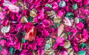 Картинка листья, лепестки, colorful, сухие, leaves, purple, petals