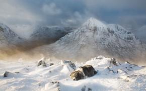 Картинка холод, зима, снег, горы, собака, лежит, метель, пурга, бордер-колли, снежные вершины