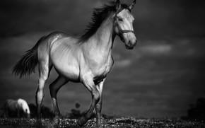 Картинка ночь, конь, лошадь