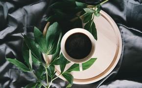 Картинка листья, кофе, лепестки, чашка