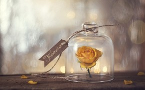 Картинка цветок, окно, forever