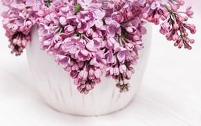 Картинка розовая, букет, ваза, сирень