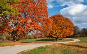 Картинка дорога, осень, фото, USA, Arrow Rock State Park