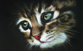 Картинка котенок, полосатый, by shonechacko