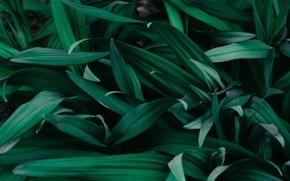 Картинка green, minimalism, leaves