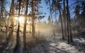 Обои зима, иней, лес, листья, лучи, свет, снег, деревья, ветки, туман, стволы, утро, мороз, дымка, сосны, ...
