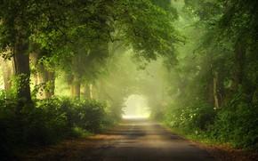 Картинка summer, road, trees, light effects