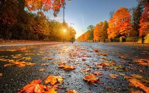 Обои золотая осень, Ed Gordeev, Царское Село, дорога в даль