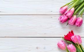 Картинка цветы, тюльпаны, розовые, fresh, wood, pink, flowers, tulips