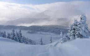 Картинка зима, снег, деревья, горы, ели, Канада, сугробы, Альберта, Banff National Park, Alberta, Canada, Скалистые горы, …