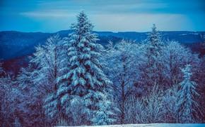 Картинка зима, лес, снег, деревья, горы, елки, вечер, мороз