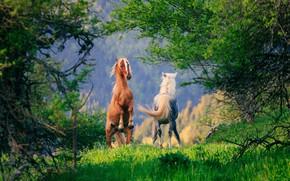 Обои лошадь, деревья, конь, пара