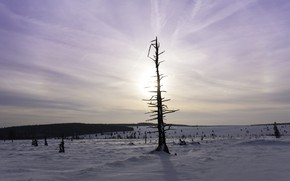 Картинка зима, дерево, утро