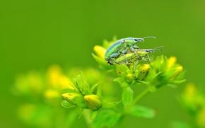 Картинка цветок, макро, фото, жуки