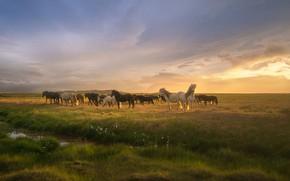 Картинка трава, облака, Солнце, лошади, grass, clouds, horses, Andrey Bazanov, the Sun, Андрей Базанов