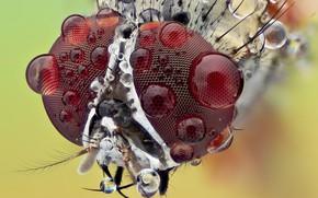 Картинка макро, роса, фон, портрет, насекомое