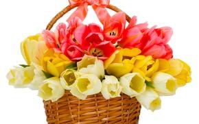 Картинка букет, тюльпаны, корзинка