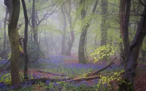 Картинка деревья, цветы, ветки, туман, поляна, весна, сиреневые