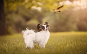 Картинка белый, лето, трава, лучи, полет, природа, фон, птица, поляна, мило, собака, колибри, щенок, птичка, лужайка, …