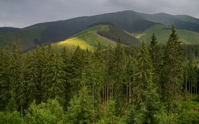 Картинка лес, горы, холмы, склоны, вид, ели