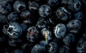 Картинка макро, ягоды, черника