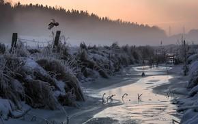 Картинка холод, зима, природа