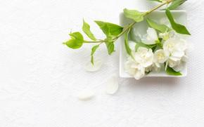 Картинка цветы, листики, веточки, жасмин