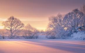 Картинка зима, снег, деревья, рассвет, утро, мороз, Роман Мурашов