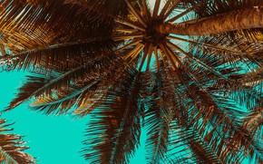 Картинка небо, листья, солнце, ветки, пальма, узор, ствол