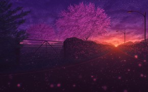 Картинка дорога, деревья, закат, природа, весна