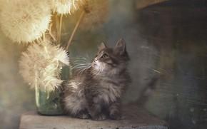 Картинка текстура, котёнок, одуванчики, Юрий Коротун