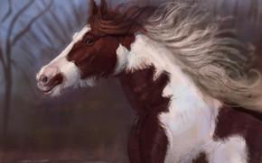 Картинка природа, лошадь, бежит