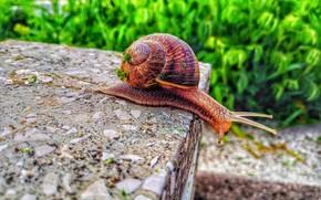 Картинка macro, animal, worm