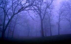 Картинка лес, деревья, ночь, природа, туман