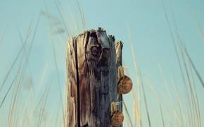 Картинка forest, landscape, log, snails