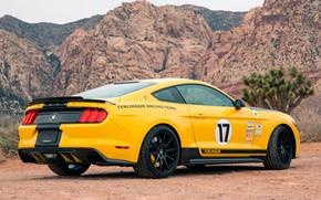Картинка Mustang, Ford, Shelby, 2016, Terlingua