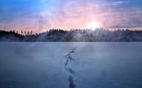 Картинка зима, снег, ночь, туман, след